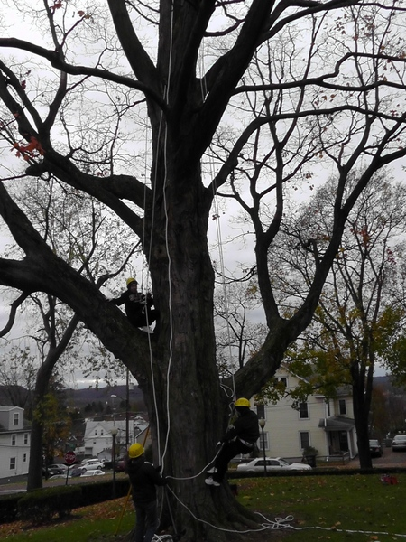 The_tree_we_climbed_at_Bloomsburg_University-001.jpg