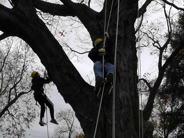 More_climbing_the_tree-001.jpg